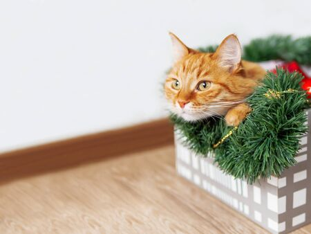 Ginger cat lies in box with Christmas and New Year decorations. Fluffy pet is doing to sleep there.
