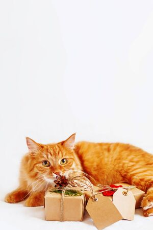 Cute ginger cat sniffing stack of Christmas presents on white background. New Year gifts wrapped in craft paper with copy space tags. Zdjęcie Seryjne