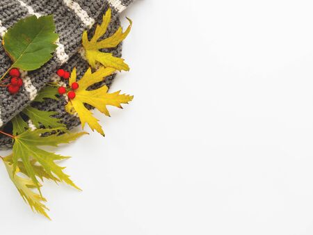 Grey knitted scarf with fallen leaves and berries on white background. Folded warm accessory with copy space. 写真素材