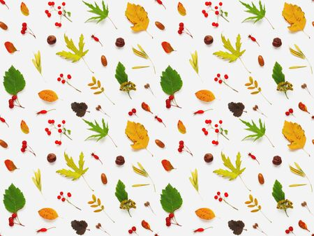 Seamless pattern made of fallen leaves and berries on white backdrop. Autumn plants background. 写真素材