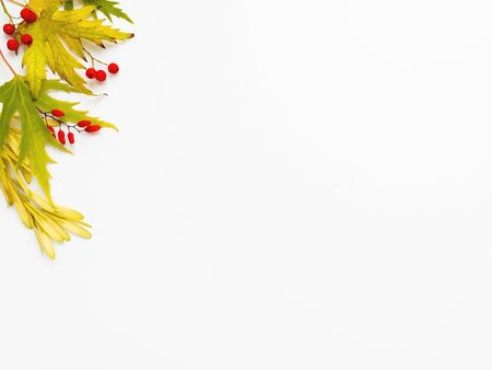 Fallen leaves and berries on white backdrop. Autumn background with copy space.