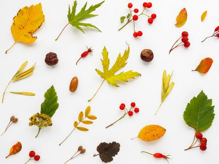 Fall background made of fallen leaves and berries on white backdrop. Autumn plants pattern. 写真素材