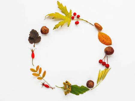 Circular frame made of fallen leaves and berries on white background. Autumn plants with copy space.
