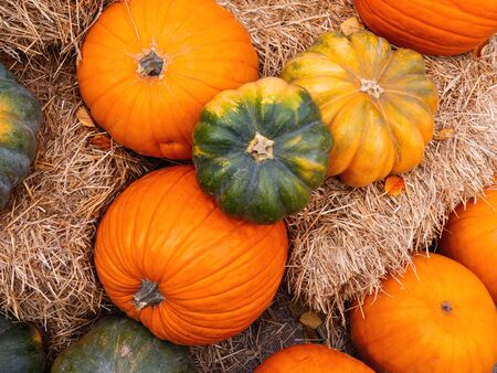 Bright orange and green pumpkins on straw. Top view on autumn crop. Stockfoto