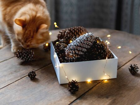 Cute ginger cat is sitting on wooden table near box with pine cones and light bulbs. Scandy style. Preparation for Christmas and New Year celebration.