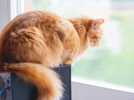 Cute ginger cat is looking out of the window. Fluffy pet is waiting for somebody or something.