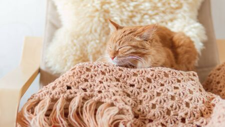 Cute ginger cat sleeping on pile of clothes. Fluffy pet mimics the color of textile. Banco de Imagens