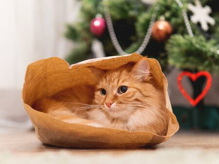 Cute ginger cat is hiding in craft paper bag. Fluffy pet in wrapping paper under the Christmas tree. Cozy home with decorations for New Year celebration. Stock Photo