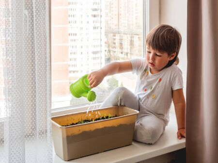 Toddler boy sits on windowsill and waters small green seedlings. Little child with green watering can. Kid's first first duties at home.