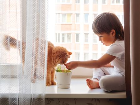 Toddler boy sits on windowsill and feeds cute ginger cat with green grass from flower pot. Little child with fluffy pet. Specially grown plant for domestic animal.