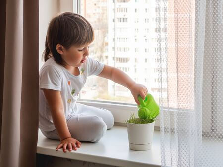Toddler boy sits on windowsill and waters green grass in flower pot. Little child with green watering can. Kid's first first duties at home. Imagens