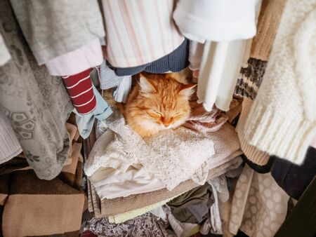 Cute ginger cat sleeps on pile of clothes. Fluffy pet has a nap in wardrobe. Domestic animal comfortably settled to sleep among towels and outfits. Banco de Imagens