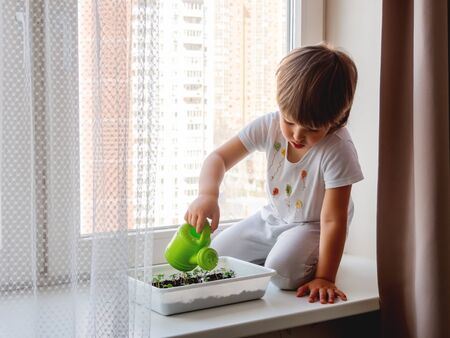 Toddler boy sits on windowsill and waters small green seedlings of basil. Little child with green watering can. Kid's first first duties at home. Imagens