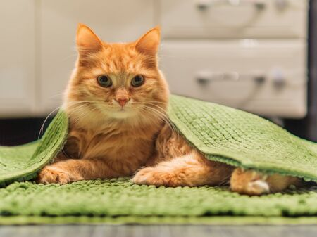 Cute ginger cat lying on bathroom floor, covered with green rug. Fluffy funny pet basked in warm room. Imagens