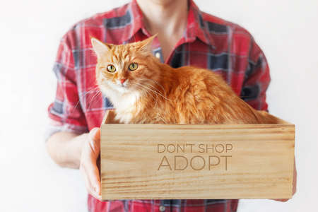 Volunteer from animal shelter holds box with stray ginger cat inside. Appeal to adopt homeless animals, not to buy them. Man in red tartan plaid shirt with cute cat. Symbol of adopting animals.