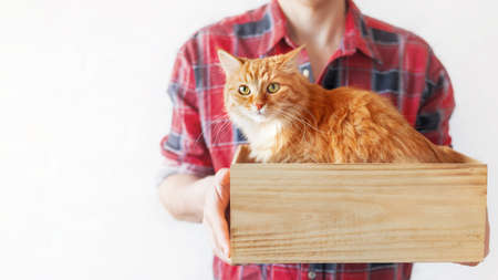Volunteer from animal shelter holds box with stray ginger cat inside. Appeal to adopt homeless animals, not to buy them. Man in red tartan plaid shirt with cute cat. Banner with copy space.