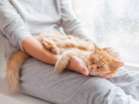 Cute ginger cat lying on woman's knees. Woman in gray pajama strokes fluffy pet. Cozy morning at home while snow is falling outside.