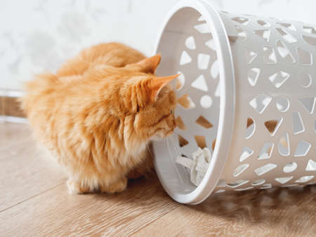 Cute ginger cat overturned wastebasket. Curious fluffy pet is looking at trash. Funny and playful domestic animal. Banque d'images