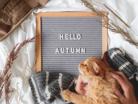 Top view on cute ginger cat and letter board with season greeting HELLO AUTUMN. Crumpled textile background with dried grass, knitted sweater and warm outfits. Fluffy pet at cozy home.