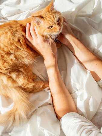 Cute ginger cat lying on woman's hand. Fluffy pet on unmade bed. Fuzzy domestic animal with owner in cozy home. Cat lover. Banque d'images