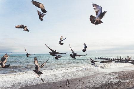 Flock of pigeons on sea embankment. Flying birds upon rocky beach. Yalta, Crimea.