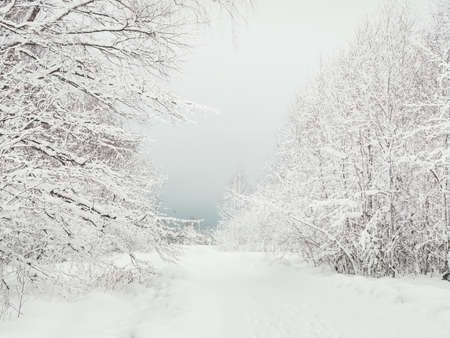 Winter natural background with trees under the snow. Rural landscape.