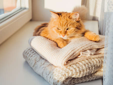 Cute ginger cat lies on pile of cable-knitted sweaters. Winter sunset. Fluffy pet on window sill with warm clothes.