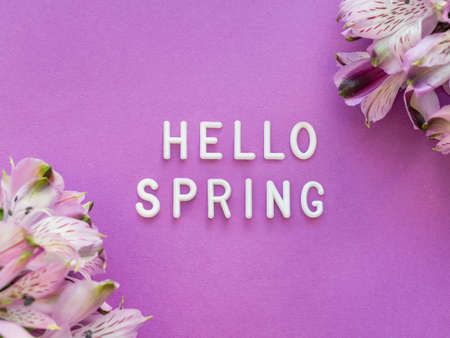 Text HELLO SPRING on bright purple background with border of fresh alstroemeria flowers. Season's greetings card.