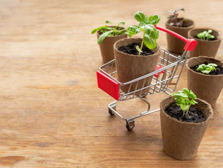 Shopping cart with basil seedling on wooden table. Spring sale in mall and flower shops. Season of planting plants in the ground. Copy space.