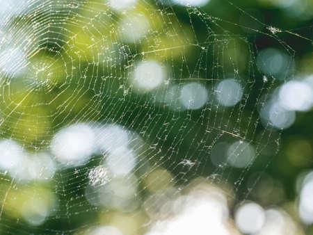 Big fragile spider web at summer sunset. Defocused green leaves as background. Sun shines through fresh tree foliage. Stockfoto