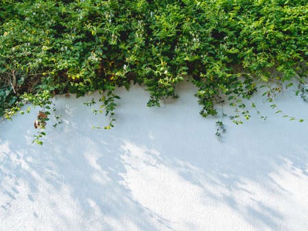 Lacy shadows from trees and bushes on white wall. Abstract background with concrete texture and green foliage of plants.