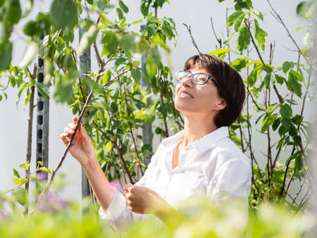 Woman chooses plants and trees for landscaping. Outdoor shelves with seedlings, flowering plants and seeds in flower shop. Open air agronomic market. Stockfoto