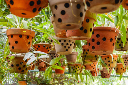 Greenhouse with hanging clay pots. Special flower pots with holes for aerial roots of tropical plants and orchids.