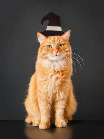 Cute ginger cat in witch hat. Fluffy pet sits on black background. Domestic animal is ready to celebrate Halloween. Costume party.