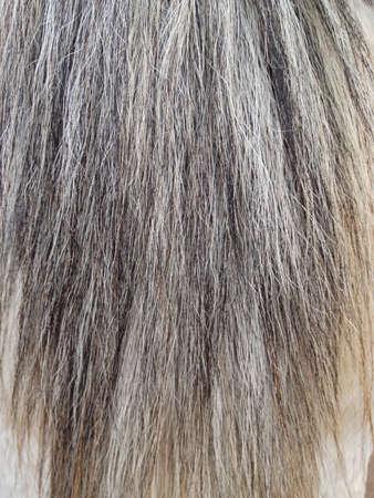 horse tail: La textura del pelo de la cola de caballo.