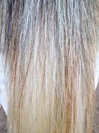 horse tail: Cola de caballo textura melena.