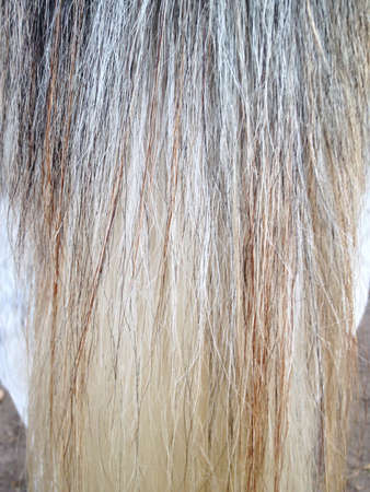 Horse tail  mane texture.