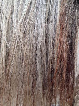 Horse mane  hair texture.