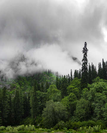 Vertically oriented scenic view of huge clouds covering the green trees and the mountains behind them, 5K 写真素材