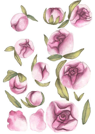 Valentines Day. Delicate Love. Hand drawn water color set of pink peony flowers with leaves on the flat white background