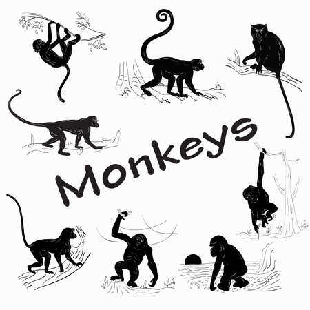 Silhouettes of monkeys on a white background  イラスト・ベクター素材