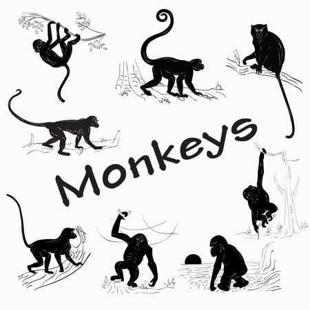 monkey clip: Silhouettes of monkeys on a white background Illustration