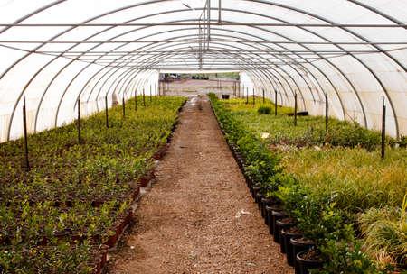 Green house Garden Stok Fotoğraf - 30539535