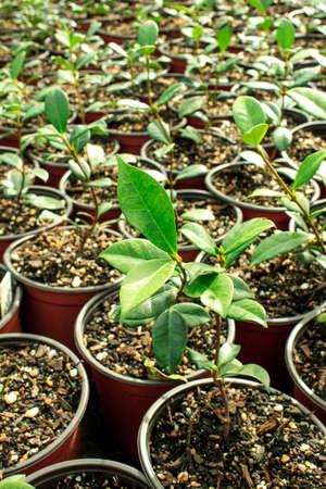 Young plants garden Stok Fotoğraf - 30539547