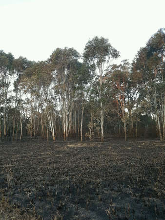 Bush fire Stock Photo