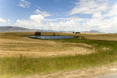 Canola fields in the Western Cape, South Africa  photo