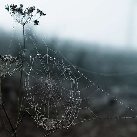 spider web with drops of dew photo