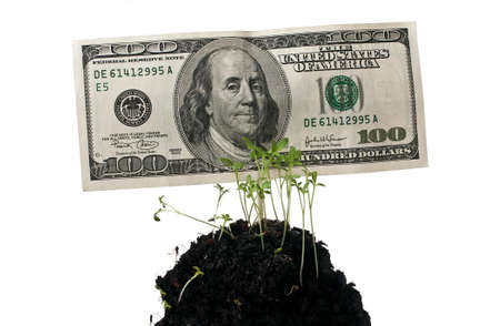 Money,hundred dollars,finance,money tree photo
