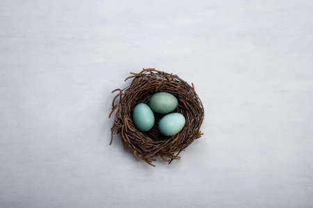 Nest with three eggs. Blue  eggs placed in a authentic looking nest. Concept image for  different purpose. Copy space. Stock Photo