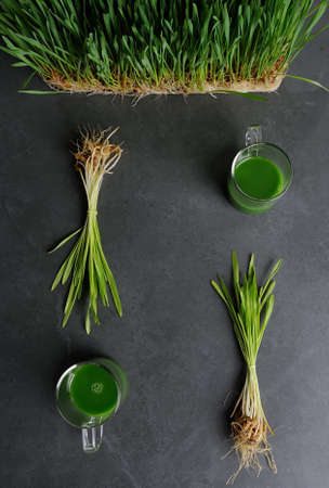 Green wheat grass juice in the glass cup  over dark gray background.Juice from wheat grass plants.Detox,nutrition food concept. Zdjęcie Seryjne